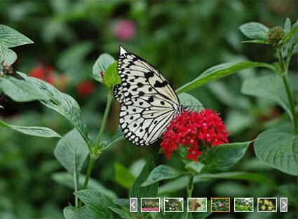 Photo Viewer Web Part screenshot